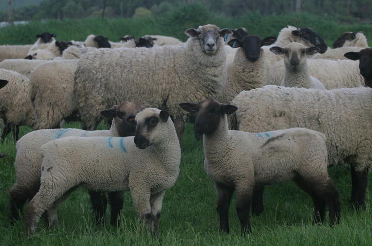 magruder-lamb
